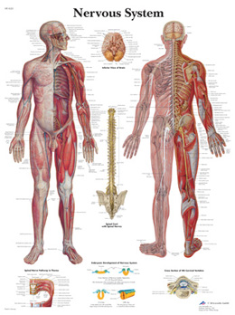 Nervous System VR1620 Poster